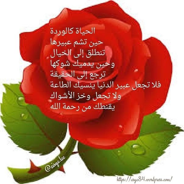 img_20161211_091004